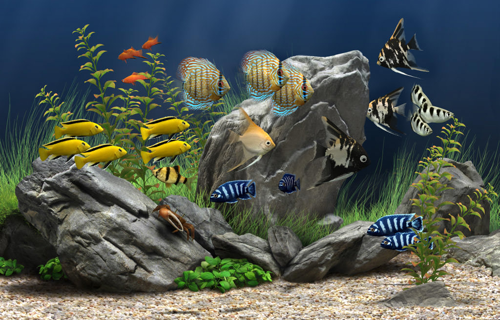 Dream Aquarium picture