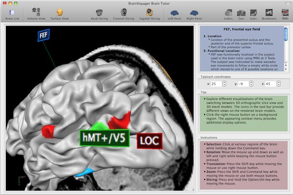 BrainVoyager QX picture or screenshot